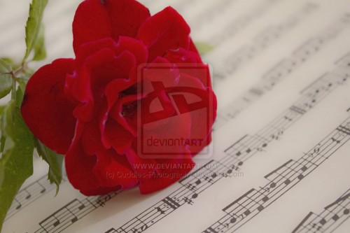 28_Musical Romantic Rose