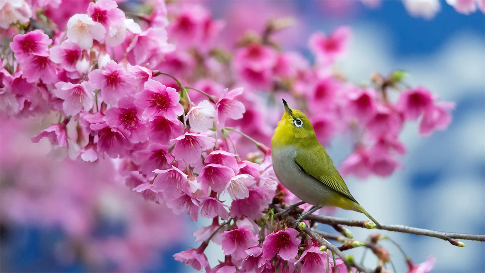 Superb Little Bird Spring Wallpaper Nice Look