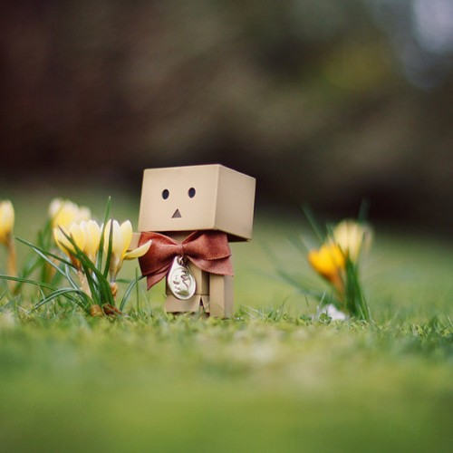 Danbo March Wallpaper by Gloeckchen