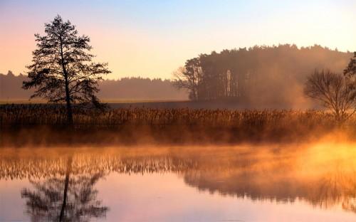 Amazing Morning Mist Background