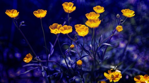 Buttercups Yellow Flower Wallpaper