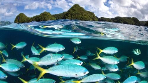 Palau Diving Center Windows Wallpaper